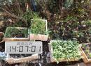 在小区里面炖菜,还打农药。物业又不管。谁能告诉我向哪个部门投诉。
